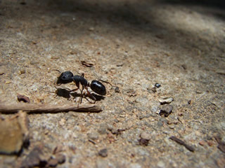 Ants Are Not Pants – Success in a Process Free World