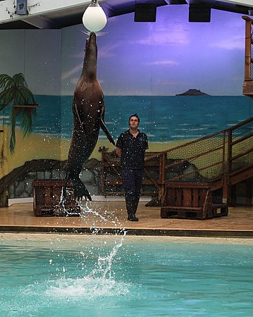 Leaping Sea Lion