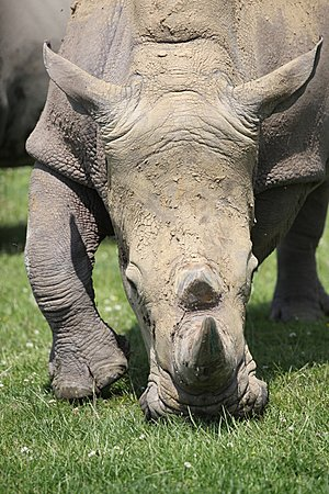 Approaching Rhino