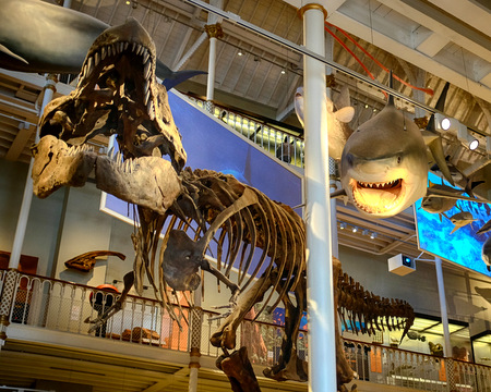 The big whale skeleton was scarier when I was 5
