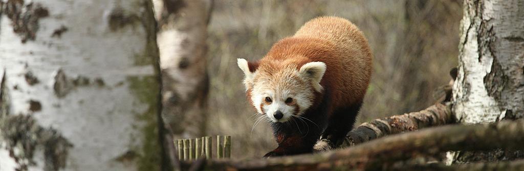 The Animals of the Highland Wildlife Park