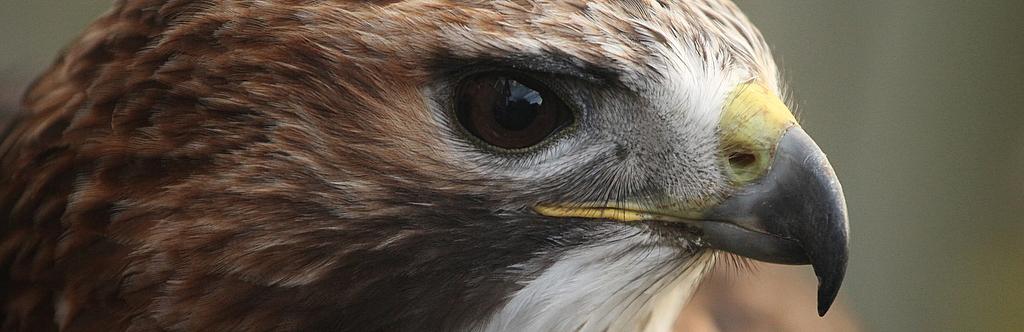 Amazing Birds at Rhuallan Raptors